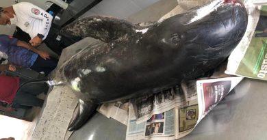Golfinho encontrado morto em praia da Paraíba será usado em ações de educação ambiental